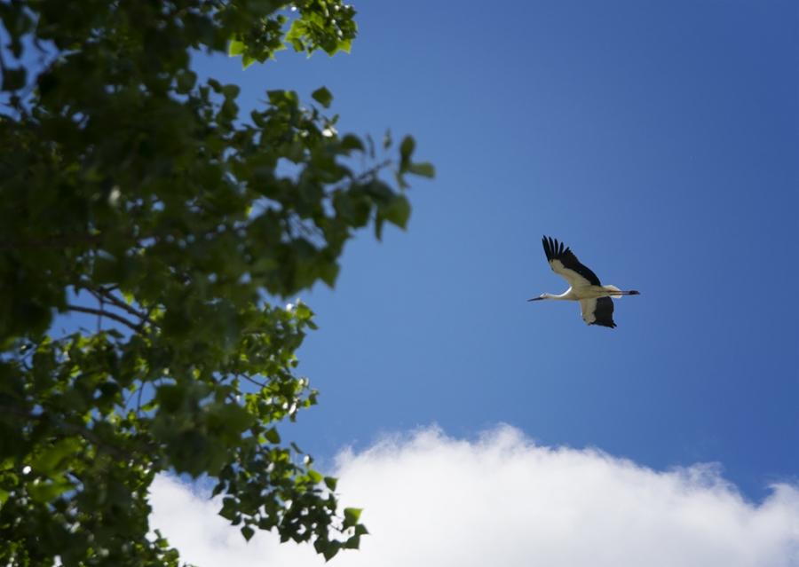 El vuelo de la cigüeña