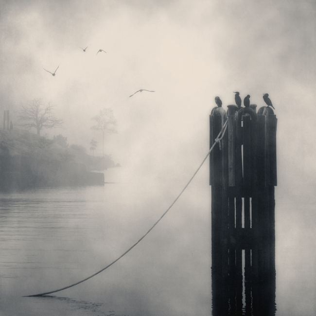 El clan de los cormoranes