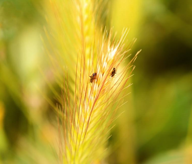 Pareja de insectos