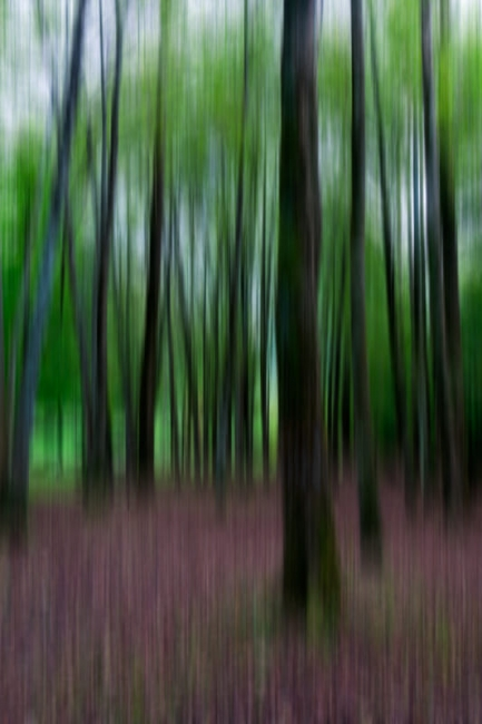 El bosque de Ibarla