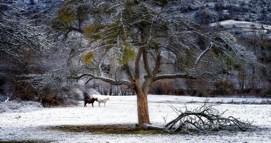 Nieve en el prado