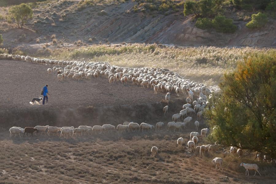 El pastor y su perro