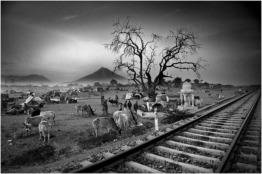 Pushkar tren