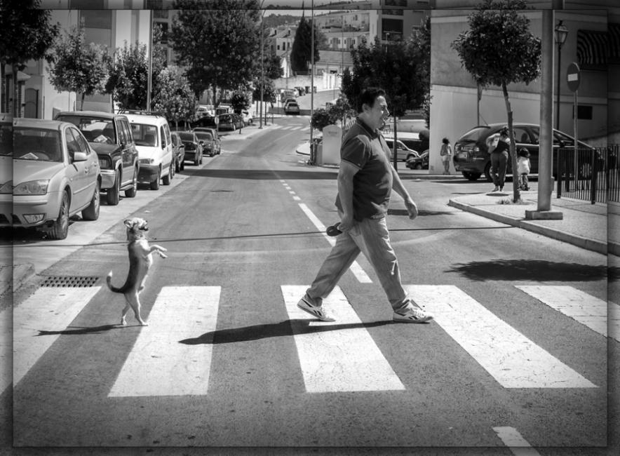 The zebra crossing