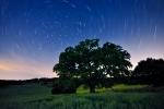 Árbol milenario y meteorito