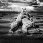 caballo de arena