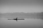 El remero del lago