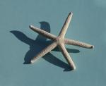 Estrella voladora