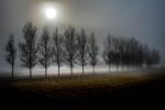 Erguidos en la niebla