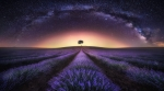 Lavender Field and Milky Way