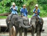 Tertulia de elefantes
