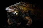 Retrato de iguana