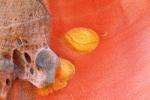 Morritos calientes en Labetxu (Valle de los Colores)