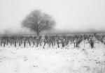 Nieve sobre las viñas