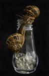 El beso de los caracoles