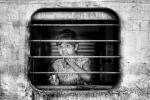 Historias de un tren 41