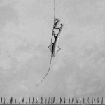 Mantis en peligro