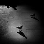 Sombras y palomas