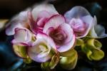 Udaberria. Primavera
