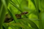 reptile Bali Island