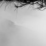 Pinos en la niebla