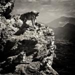 Territorio de lobos